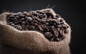 kaffeefox bohnen mobile kaffeebar